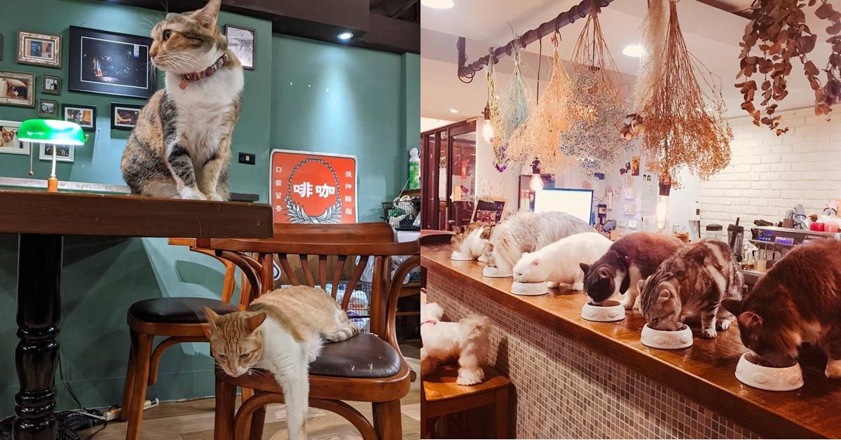 台北5間人氣「貓咪咖啡廳」推薦!吃飯工作還能撸貓超療癒!