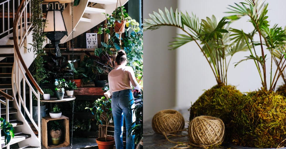 室內植物照顧6招請筆記!「生態瓶」增添空間亮點,高顏值「苔蘚球」好養又好看!