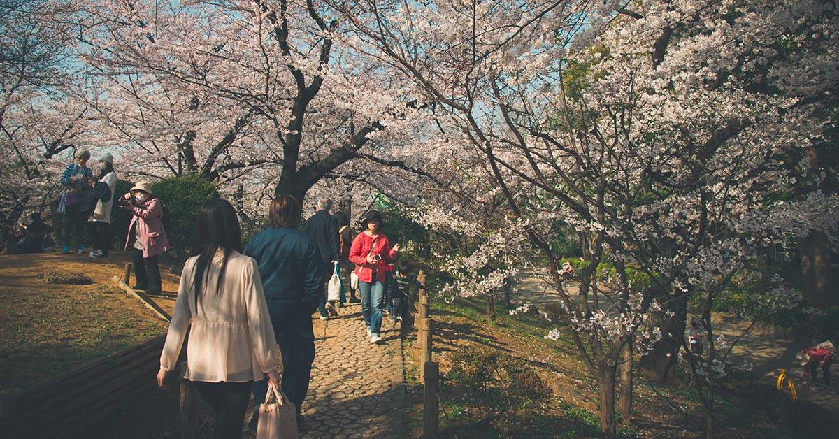東京近郊野餐成為新流行,編輯推薦四個可以野餐也能賞櫻的景點大公開