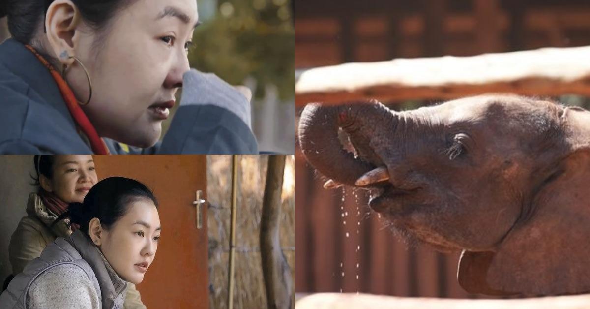 小S、周迅、王鶴棣等人接力響應保護大象!演藝圈掀起的「斷鼻妝」你挑戰了嗎?