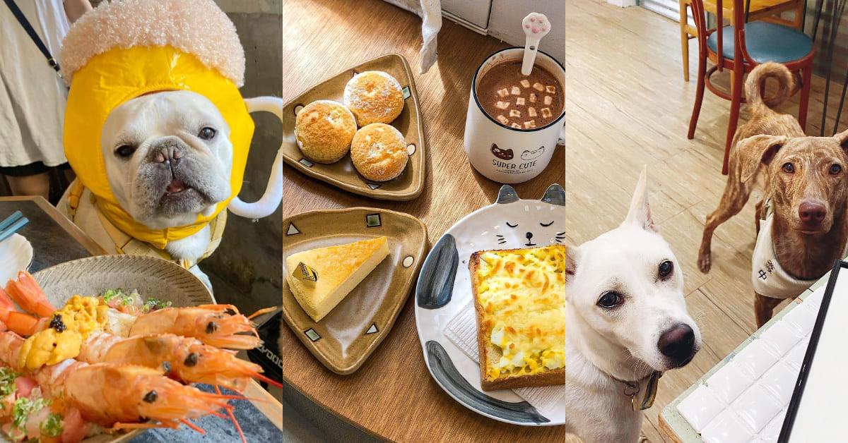 台南寵物友善餐廳Top5!美味早午餐、 招牌「寵物餐」樣樣有,假日跟毛小孩約會去吧!