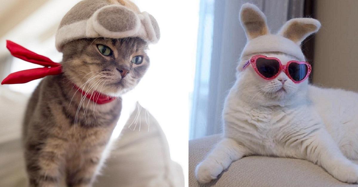 自己掉的毛自己用!貓咪三兄弟cosplay,用掉毛戳出「貓毛氈」帽子變裝萌度破表