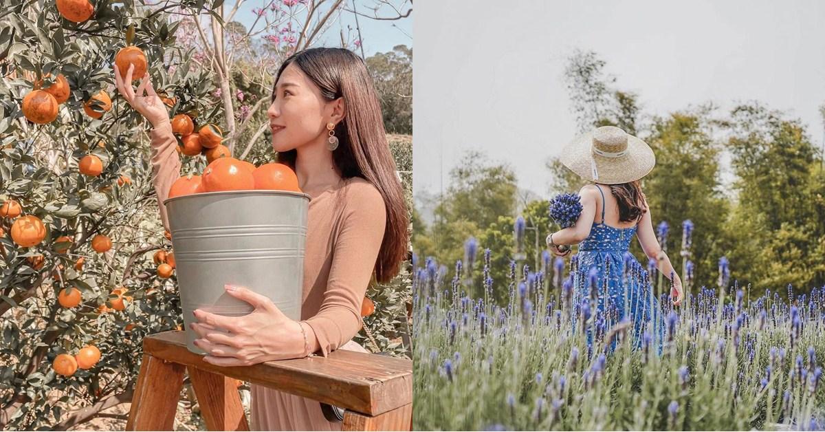 療癒假期這樣過!4個苗栗「花草系」浪漫景點,享受百花盛開之美