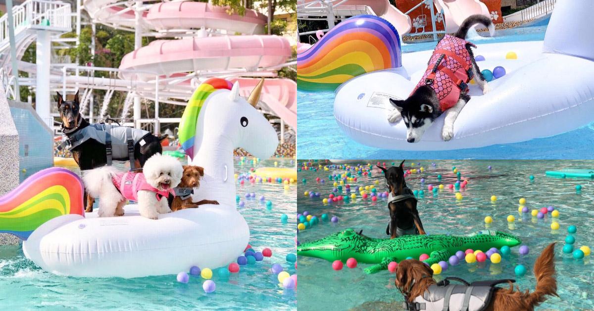 全亞洲最大寵物公園落腳台中!超大型水上樂園,毛小孩跟主人搶著下水