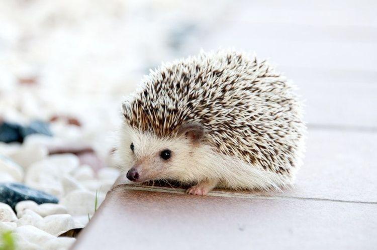 心理測驗|選一種動物陪你去旅行,測出未來伴侶的優缺點-2