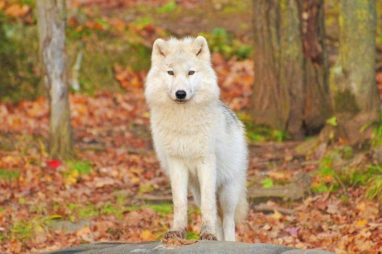 心理測驗|選一種動物陪你去旅行,測出未來伴侶的優缺點-4