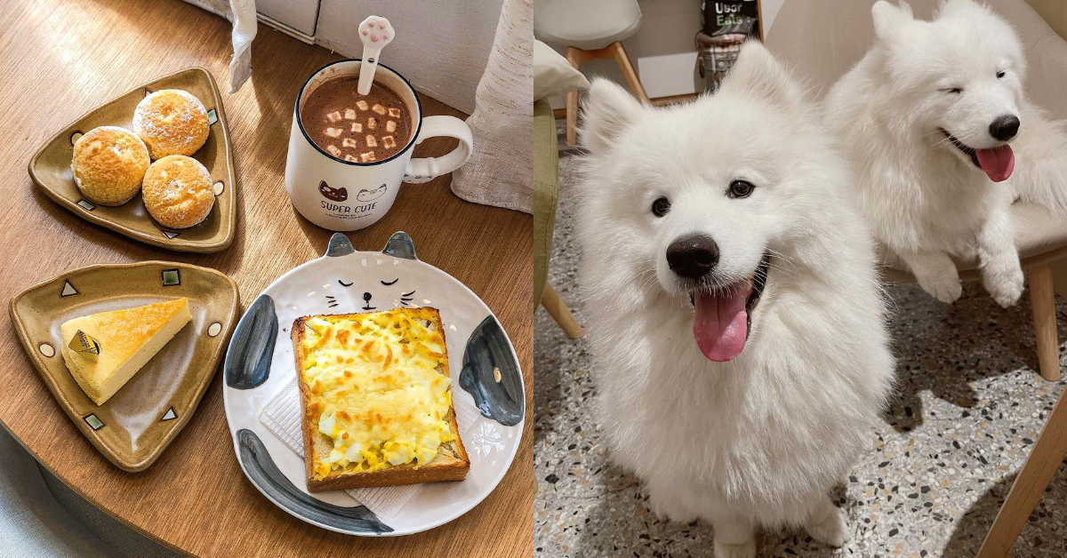 台南寵物友善餐廳Top5!美味早午餐、 招牌「寵物餐」樣樣有,假日跟毛小孩約會去吧!-5
