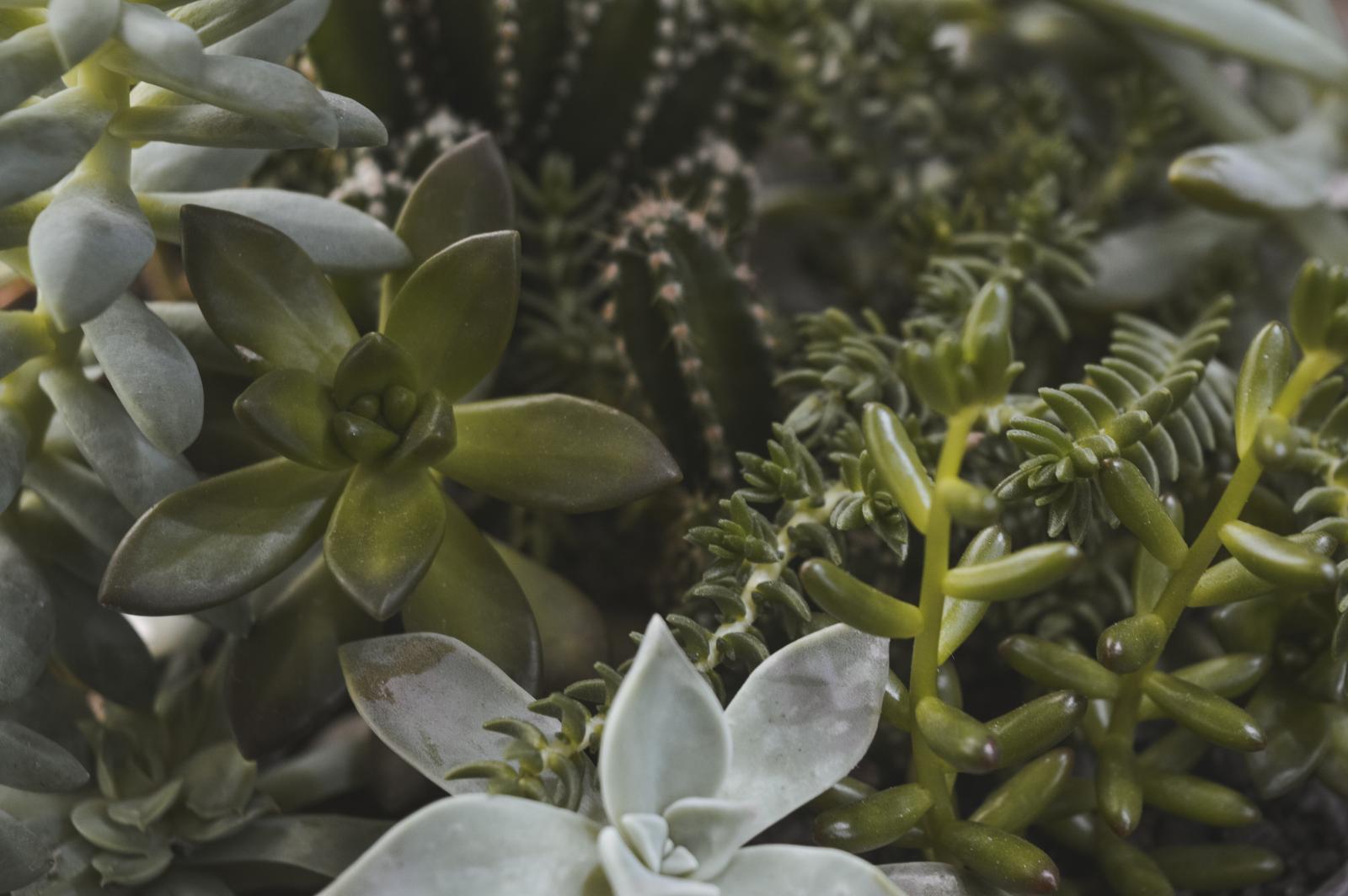 室內植物禁忌注意4點!假花是地雷,「開運竹」放錯反而會破財!-4