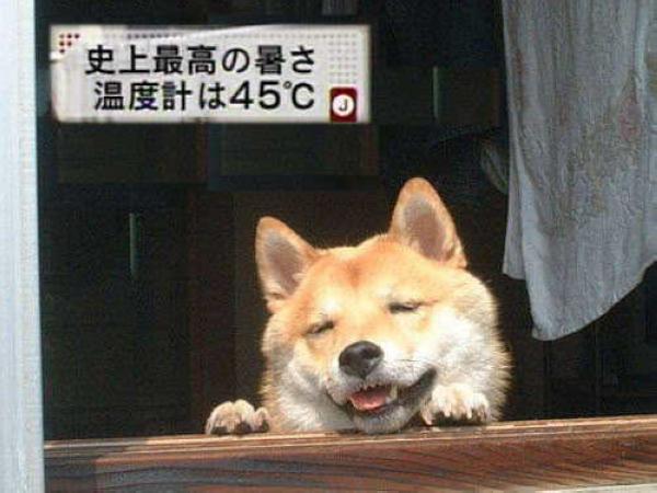 熱到快中暑的狗狗