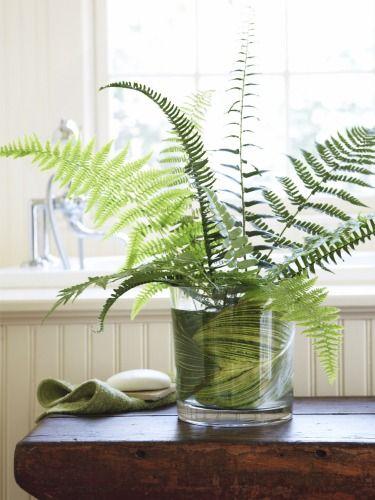 蕨類植物是家裡增添綠意的好幫手。