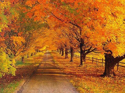 秋天是最美的季節!跟著秋季美景環遊世界去| Bella.tw儂儂