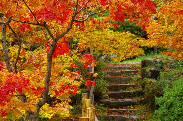 日本一直是賞楓國家排行榜上的佼佼者,加上它又離我們台灣那麼近,那當然要去看看到底漂亮到什麽程度!