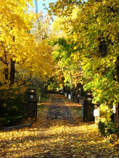金黃色的楓葉的感覺又完全不一樣,給秋天帶來了明亮的活力。