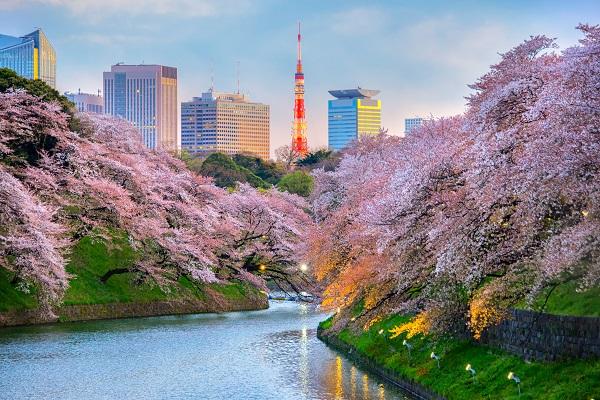 日本東京 千鳥淵